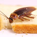 Избавьтесь от тараканов за один раз