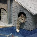 Для чего коту нужен специальный домик