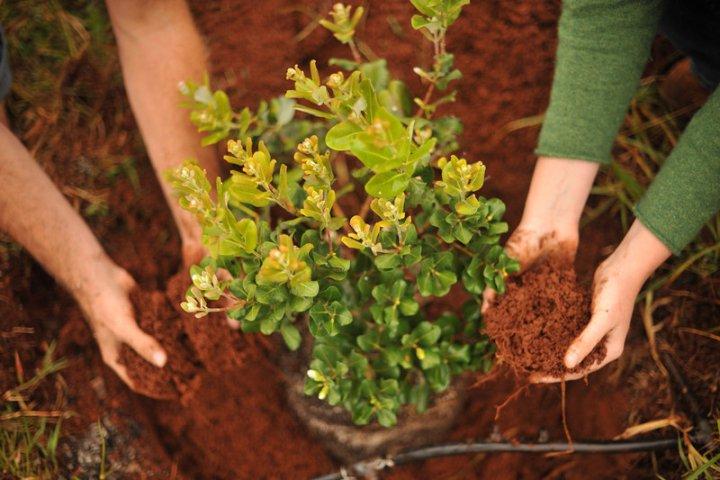 Лиственные растения - выбор, посадка, уход