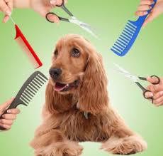 Как ухаживать за лапами собаки